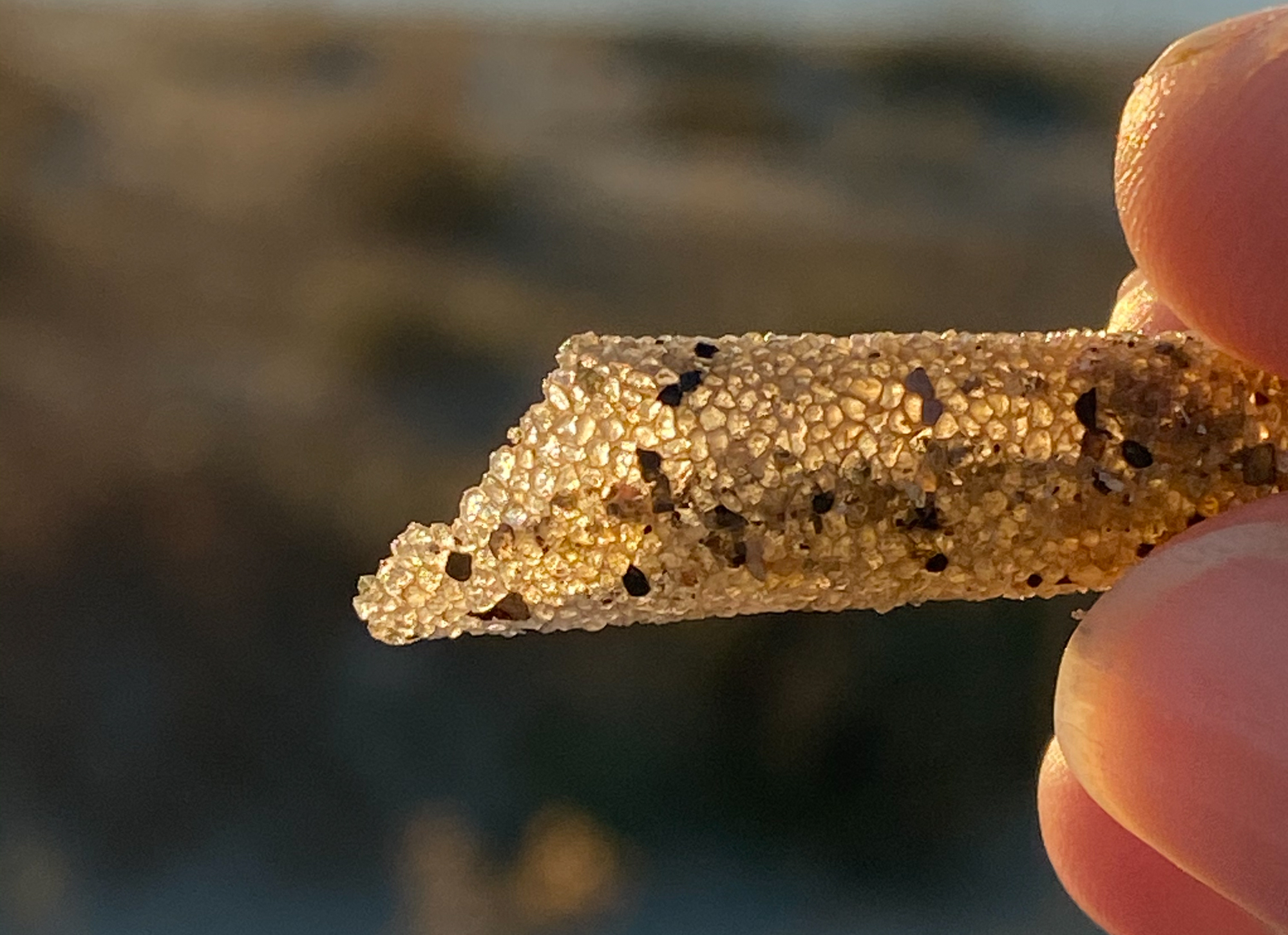 Ice Cream Cone Worms Make Tiny Tubes One Sand Grain Thick